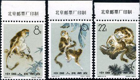 特60 金丝猴
