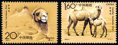 1993-3 《野骆驼》特种邮票