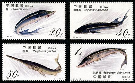 1994-3 《鲟》特种邮票